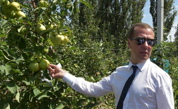 """Premier Rosji oświadczył, że """"Polacy jabłka wysyłane na eksport oblewają chemikaliami, a sami jedzą te dobre"""". Dmitrij Miedwiediew przekonywał przy tym, że zagraniczną żywność, niszczoną w ramach embarga, mogą z powodzeniem zastąpić produkty rosyjskie."""