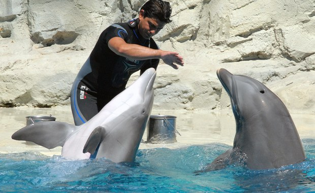 Nie ma zgody na komercyjne delfinaria w Polsce - oświadczył na rządowym blogu minister środowiska Maciej Grabowski. Podkreślił, że decyzje ws. delfinów będą podejmowały instytucje ochrony środowiska. Delfinarium chciały zbudować gmina Mszczonów.