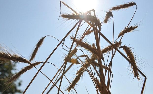 Nawet pół miliarda złotych mogą wynieść spowodowane suszą straty rolników na Mazowszu. Jak poinformował wojewoda, kataklizm dotknął na razie 45 tysięcy gospodarstw, ale może ich być prawie dwa razy tyle.