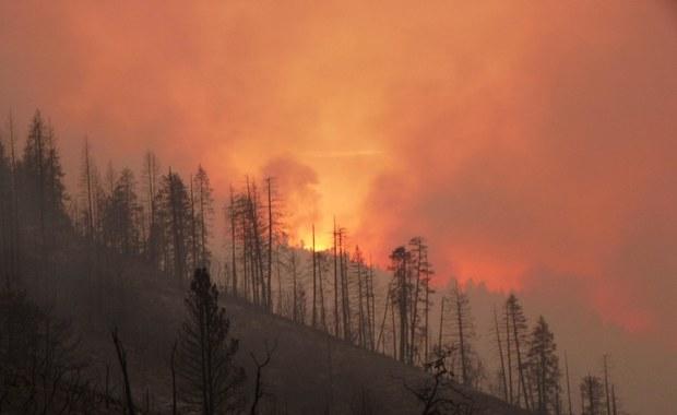 Tysiące mieszkańców północnej Kalifornii zostało ewakuowanych z powodu rozprzestrzeniających się w szybkim tempie pożarów. Do szpitali z poparzeniami trafiło czterech strażaków.