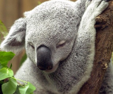 Śpimy krócej, ale bardziej wydajnie
