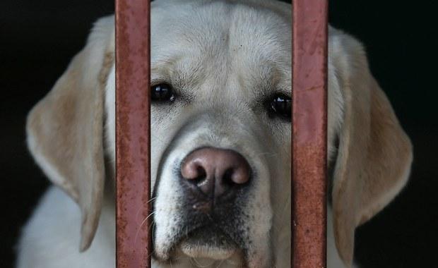 Piotr K., znany ultramaratończyk, który w sierpniu przywiązał psa do bramy schroniska dla zwierząt, w upalny dzień, chce dobrowolnie poddać się karze. Prokuratura Rejonowa w Augustowie wnosi o 1350 zł grzywny i 1 tys. zł na ochronę zwierząt.