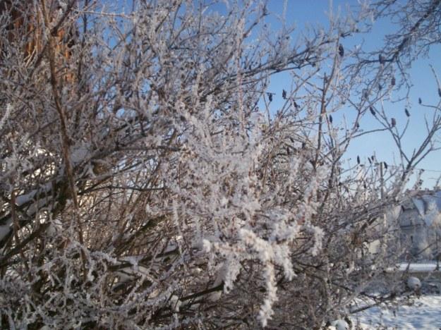 Zima śnieżna czy mroźna?