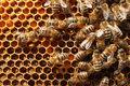 """Płyta """"One"""", czyli symfonia na 40 tysięcy... pszczół"""