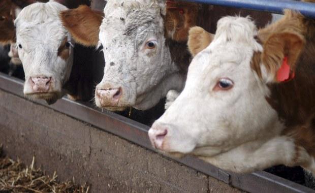 Parlament Europejski opowiedział się za zakazem prewencyjnego leczenia zwierząt antybiotykami. Europosłowie poparli także wspieranie badań nad nowymi metodami leczenia w weterynarii. Nowe przepisy mają pomóc w walce z rosnącą odpornością bakterii na antybiotyki.