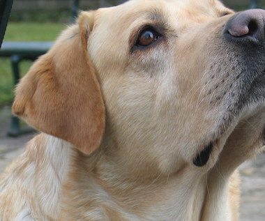 """""""Przez psa muszę kupić kilka dodatkowych biletów!"""". Będzie interwencja ws. podróży niewidomych nocny"""