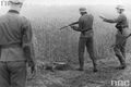 18 maja 1943 r. Zbrodnia w Szarajówce
