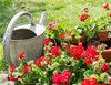Kwiaty na balknon i okna