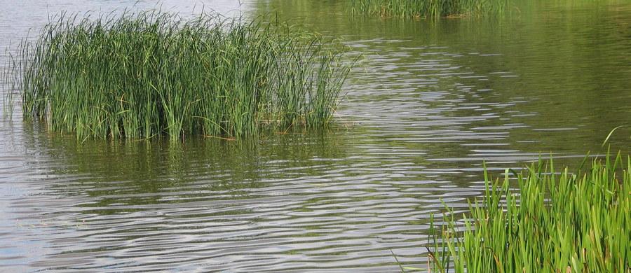 Do dramatu doszło pod Gdańskiem. W jeziorze Osowskim utonęły matka i córka - dowiedział się reporter RMF FM Kuba Kaługa.