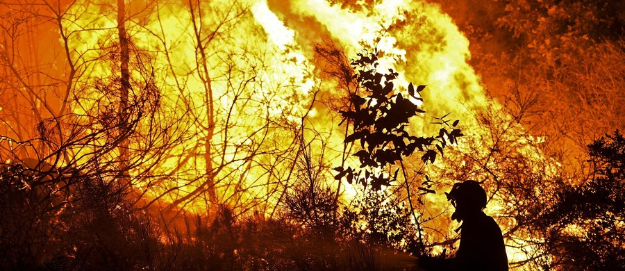 Nawet 98 proc. szalejących od początku sierpnia pożarów lasów w Portugalii mogło być spowodowane przez ludzi, z tego trzy czwarte celowo - poinformował szef stowarzyszenia portugalskich strażaków Jaime Marta Soares, przedstawiając szacunki tej organizacji. W ciągu 12 dni ogień zabił trzy osoby i strawił co najmniej 80 tys. hektarów lasów.
