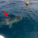 Rekin podpłynął za blisko...