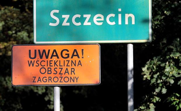 """Po znalezieniu chorego nietoperza w Szczecinie wyznaczono obszar zagrożony wścieklizną. Trzymiesięczna kwarantanna obejmuje jedną czwartą miasta. """"Nie dotykajmy dzikich zwierząt"""" – apelują eksperci."""