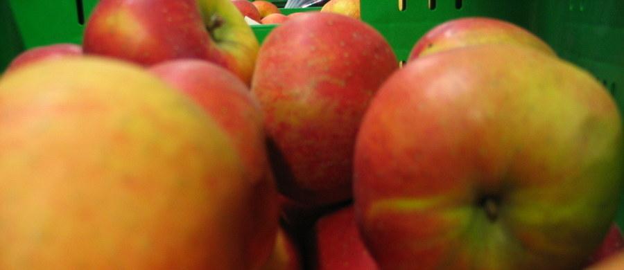Spory transport jabłek zatrzymały rosyjskie służby w rejonie Smoleńska. Owoce oficjalnie pochodziły z Białorusi, jednak znaleziono etykiety wskazujące na to, że tak naprawdę są z Polski.