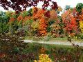 rosliny-ozdobne-jesienia-m.jpg