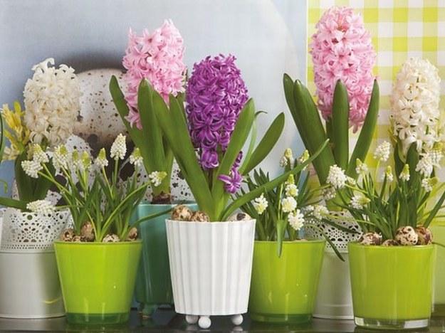 Kwiaty w mieszkaniu kwitnące w okresie zimowym