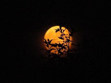 Niebo ozdobił złoty księżyc