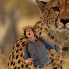 Andy i zwierzątka