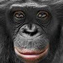głowa małpy.jpg