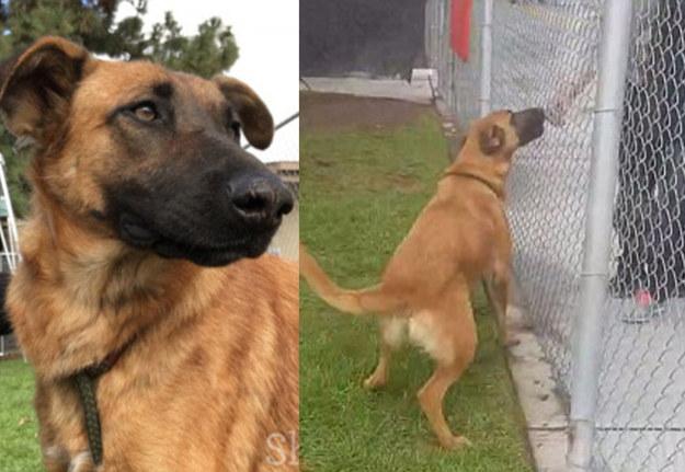 Porzucony pies rozpoznał w schronisku swoich dawnych właścicieli