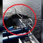 Sceny jak z horroru! Aligator na łodzi!