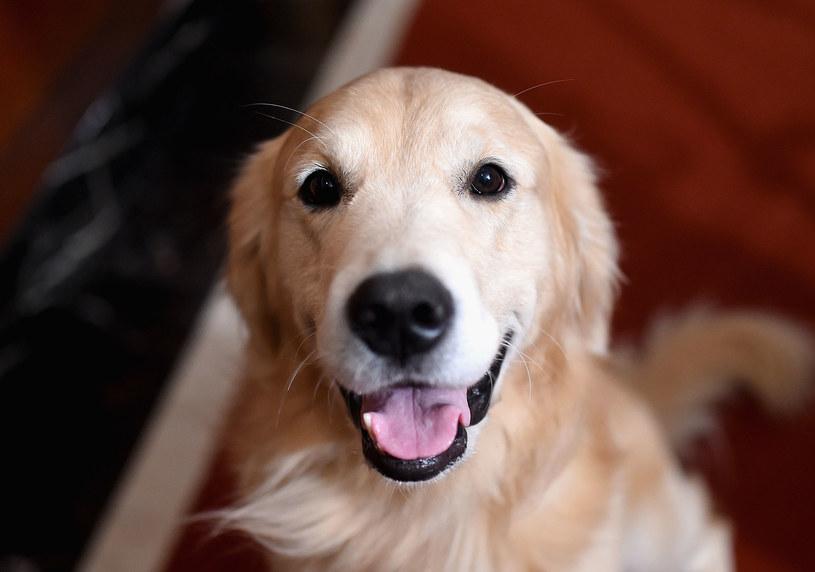 Uczeni z Uniwersytetu w Glasgow opublikowali najnowsze badania, z których wynika, że psy są fanami muzyki reggae i soft rock.