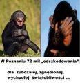 kopia (19) kaczyński - małpy.jpg