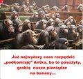 posłowie małpy.jpg