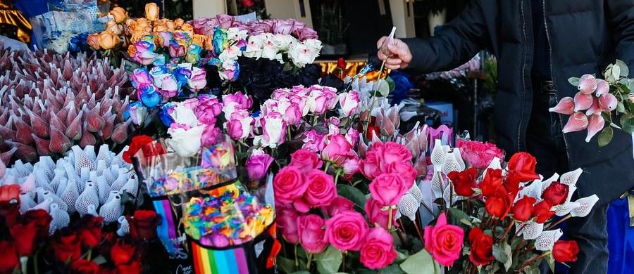 """Walentynkowy niezbędnik kwiatowy - czy taki istnieje? Okazuje się, że tak. Wybierając kwiaty powinniśmy postawić przede wszystkim na klasykę, czyli czerwone róże. Jednak nie stronimy od koloru amarantowego, bo ten zbliżony jest wizualnie do czerwieni. Ważne też, aby nie wręczać parzystej liczby kwiatów. """"Liczba parzysta, jako skończona, jest zarezerwowana dla zmarłych, bo ich życie się skończyło"""" - mówi w rozmowie z RMF FM florystka z łódzkiej pracowni """"Parviflora"""" Magdalena Lasocka."""