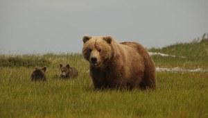 Dzika Alaska