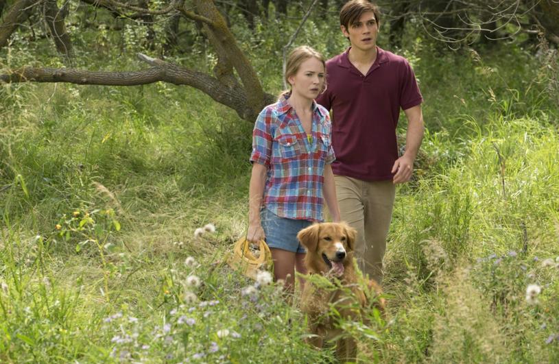 """Film """"Był sobie pies"""" był najpopularniejszym premierowym tytułem ubiegłego weekendu (17-19 lutego). Opowieść przyciągnęła do kin 88 tysięcy widzów."""