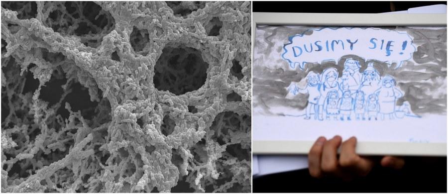 """Zanieczyszczenie powietrza, w tym składniki smogu, mogą wpływać na zachowanie bakterii atakujących nasz układ oddechowy i w ten sposób zmieniać skuteczność antybiotyków - piszą na łamach czasopisma """"Environmental Microbiology"""" naukowcy z University of Leicester. Wyniki ich badań rzucają światło na nieznany do tej pory mechanizm działania smogu, mogą też pomóc w skuteczniejszej walce z chorobami zakaźnymi, o których wiadomo, że na terenach o silnym zanieczyszczeniu powietrza występują częściej."""
