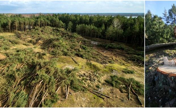 Jest śledztwo ws. wycięcia czterech hektarów lasu w Łebie - z urzędu wszczęła je Prokuratura Rejonowa w Lęborku. Według wstępnych ustaleń, na terenie, na którym doszło do wycinki, znajdowały się stanowiska roślin podlegających ochronie.