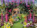 ogrod-kwiaty-kot-grafika.jpeg