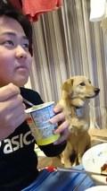 Pies chciał trochę jogurtu...