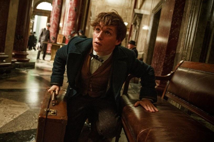"""Newta Scamandera znają wszyscy fani """"Harry'ego Pottera"""". Autor podręcznika, z którego korzystali uczniowie w Hogwarcie, jest głównym bohaterem scenopisarskiego debiutu autorki """"Pottera"""" - J.K.Rowling. Film """"Fantastyczne zwierzęta i jak je znaleźć"""" tafia własnie na płyty 4K Ultra HD Blu-ray, Blu-ray 3D, Blu-ray i DVD."""