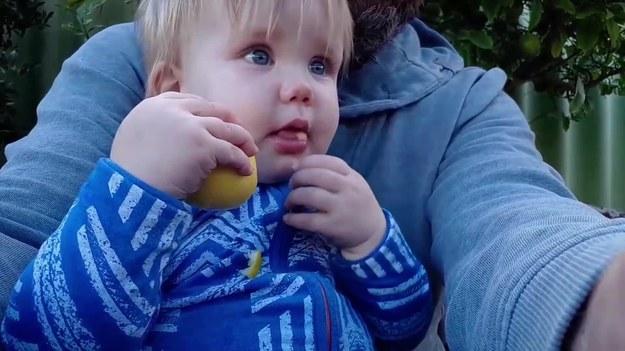 Ojciec tej małej dziewczynki był totalnie zaskoczony, gdy jego córa wzięła cytrynę i  - bez skrzywienia - zaczęła ją jeść jakby to było zwykłe jabłko. Zobaczcie.