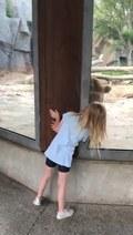 Niedźwiedz bawi się w chowanego z dzieckiem