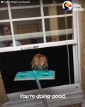 Mężczyzna znalazł sowę w swoim mieszkaniu