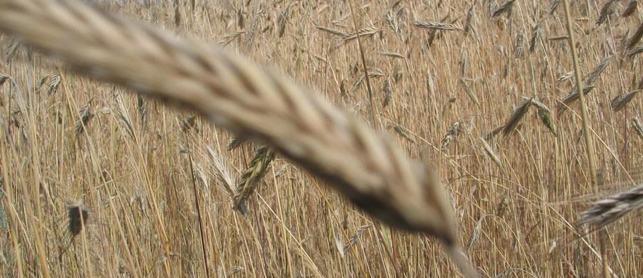 System informatyczny obsługujący dopłaty dla rolników działa sprawnie, a pieniądze zostaną wypłacone w terminie – twierdzi Agencja Restrukturyzacji i Modernizacji Rolnictwa. Podczas wtorkowej konferencji prasowej prezes agencji starał się dementować niepokojące doniesienia, że system jest niesprawny, a w związku z tym rolnicy mogą nie dostać dopłat w terminie. Gdyby do tego doszło, Komisja Europejska mogłaby nałożyć na Polskę miliardową karę.