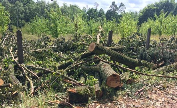 Nawet półtora roku potrwa porządkowanie lasu po przejściu w miniony piątek trąby powietrznej na terenach nadleśnictwa Rudy Raciborskie. Żywioł doszczętnie zniszczył lub uszkodził w sumie 1,5 tysiąca hektarów lasu - to tyle co 2200 boisk piłkarskich. Drzewa są połamane albo wyrwane z korzeniami.