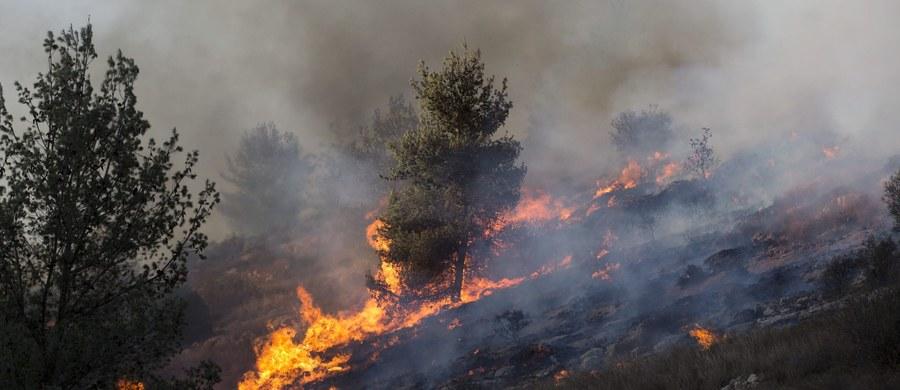 Strażacy walczyli z dużymi pożarami lasów na wybrzeżach Adriatyku w Chorwacji i Czarnogórze. Niektórzy mieszkańcy musieli opuścić swoje domy - poinformowały lokalne media. Akcję gaśniczą utrudniał silny wiatr.