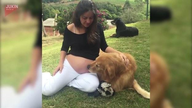 Kobieta powiadomiła swojego psa, że wkrótce zostanie starszym bratem. I wtedy stało się, coś niesamowitego... usiadł obok niej, i zaczął lizać jej brzuch.