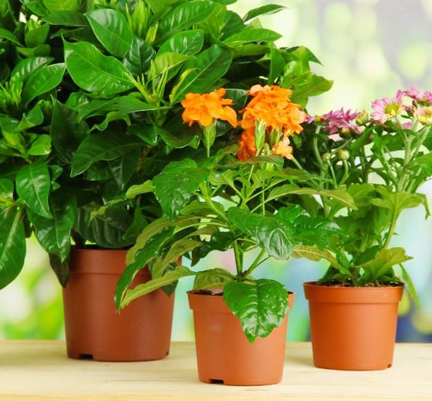 Drożdże w pielęgnacji roślin? Efekty cię zaskoczą!
