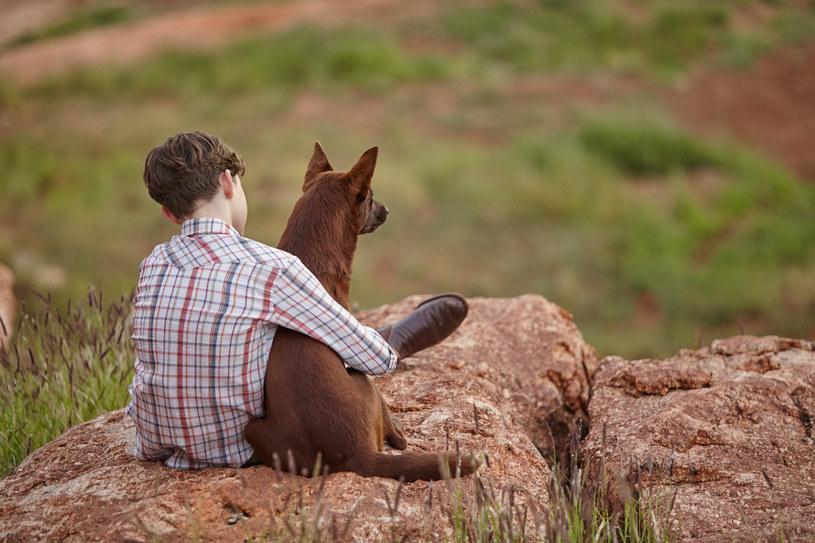 """Są filmowi bohaterowie, którzy przechodzą do legendy, ale są też legendy, których niesamowite przygody zostają przeniesione na wielki ekran. To właśnie tą drugą drogą podążył pies Rudy i jego nadzwyczajna australijska historia. Przytaczamy prawdziwą opowieść, jaka kryje się za filmem """"Moje wakacje z Rudym"""". Ta familijna produkcja pojawi się w polskich kinach już 11 sierpnia."""