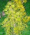 folder-bush-coniferous-770.jpg