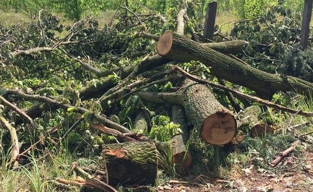 Co najmniej 40 milionów złotych kosztować będzie odbudowa około 2 tysięcy ha lasów w Nadleśnictwie Rudy Raciborskie w Śląskiem, zniszczonych na początku lipca przez trąbę powietrzną - wynika z najnowszych szacunków leśników.