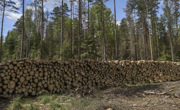 Będzie odpowiedź Ministerstwa Środowiska na specjalny apel Komisji Europejskiej w sprawie Puszczy Białowieskiej, ale wycinka nie zostanie zatrzymana -  dowiedział się nieoficjalnie reporter RMF FM Grzegorz Kwolek.