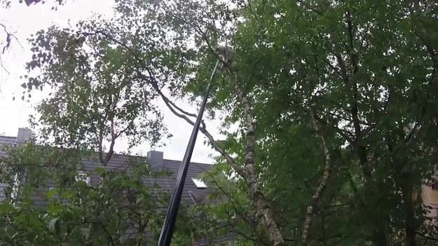 Nagranie pochodzi z akcji ratunkowej kota, który postanowił wejść na sam szczyt wysokiego drzewa.