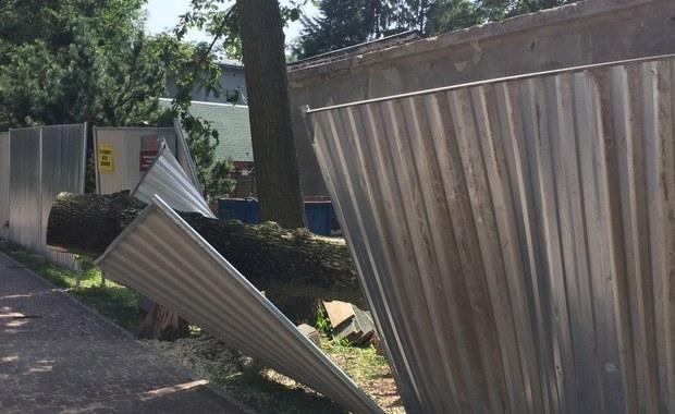 Po czwartkowych nawałnicach w Łodzi na 5 skrzyżowaniach nadal nie działa sygnalizacja świetlna, a tramwaje kilku linii jeżdżą zmienionymi trasami. Ciągle zamknięty dla zwiedzających jest Ogród Botaniczny, natomiast w zoo zdołano uporać się z wiatrołomami i jest już otwarte.