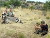 Zobacz trailer: Safari